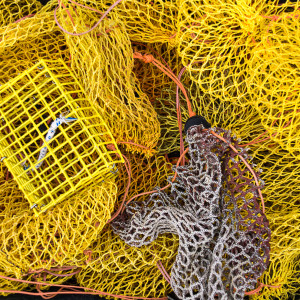 Lobster bait bags along the Eastern Shore of NS by Picture Perfect Tours